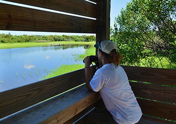 Lady looking at marsh with binoculars