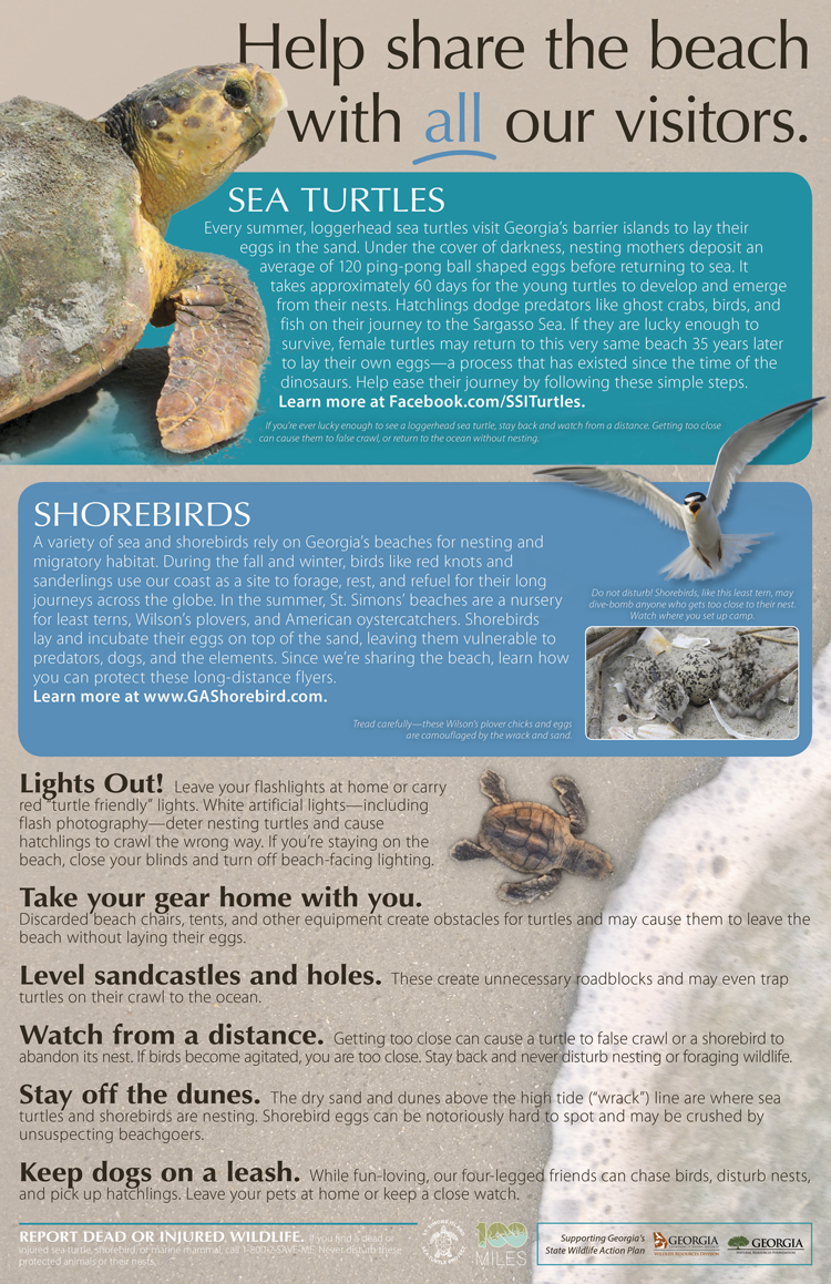 Protect sea turtles and shorebird worksheet
